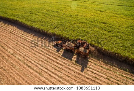 Sugar cane hasvest plantation aerial Royalty-Free Stock Photo #1083651113