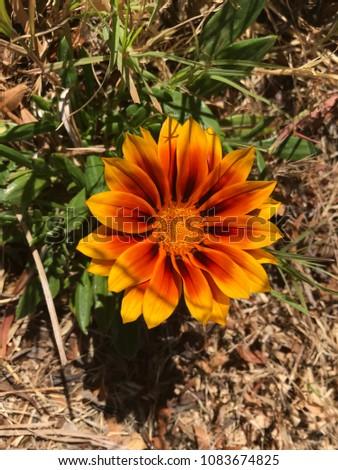 Orange gold flower #1083674825
