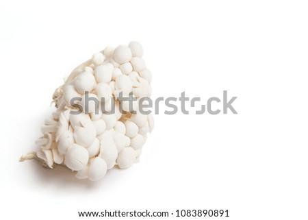shimeji mushrooms both brown and white varieties #1083890891
