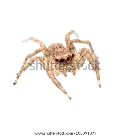 animal jumping spider isolated on white #108391379