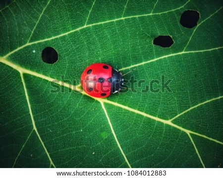 Ladybug on green leaves #1084012883