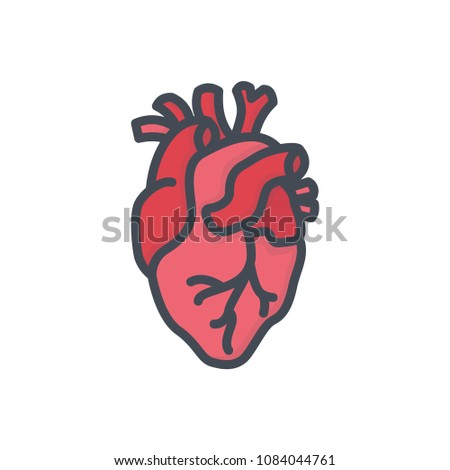 Heart colored human organ icon illustration raster