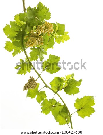bunches of grapes on white background #108427688