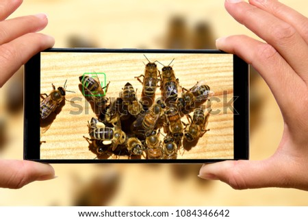 Woman with mobile phone photos of bees.