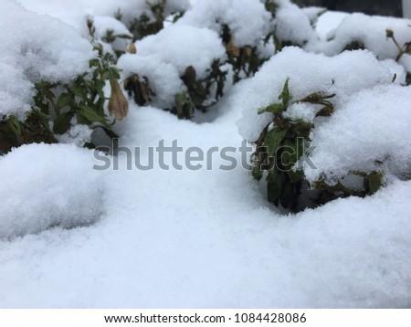 Little forest of sleeping flowers #1084428086