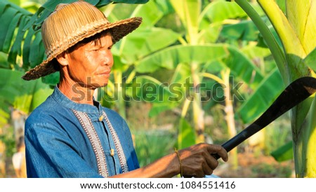 Portrait of middle aged farmer Asia , on a ?banana tree and nature background , Concept: Organic farming. #1084551416