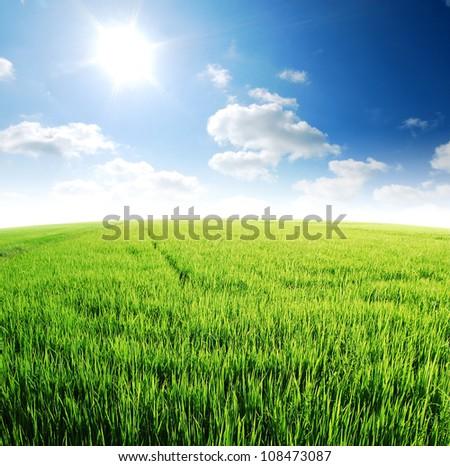 Rice field green grass blue sky cloud cloudy landscape background #108473087
