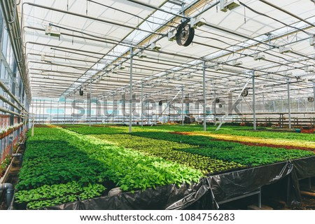 Ornamental plants and flowers grow for gardening in modern hydroponic greenhouse nursery or glasshouse, industrial horticulture, cultivation of seedlings technology #1084756283
