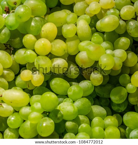 A bunch of fresh, ripe white grapes #1084772012