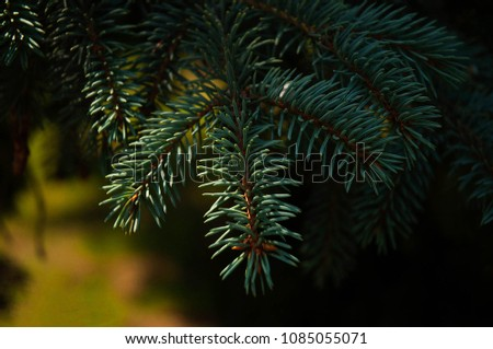 Pine branch close up #1085055071