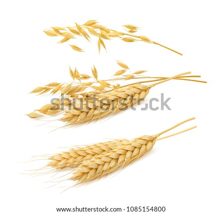 Wheat and oat cereal set isolated on white background. Package design elements with clipping path #1085154800