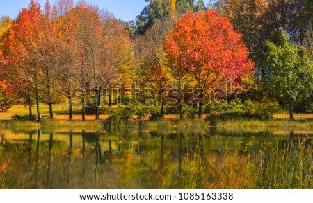 Autumn colors in the Drakensberg South Africa #1085163338