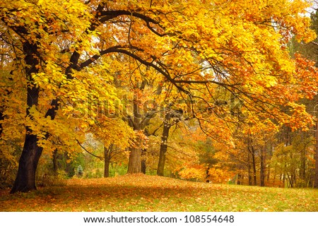 Collection of Beautiful Colorful Autumn Leaves / green, yellow, orange, red #108554648