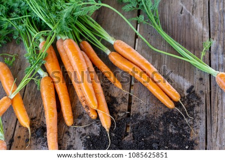 Fresh organic carrots on wooden background #1085625851