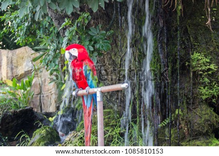 Macaw in the Rain forest #1085810153