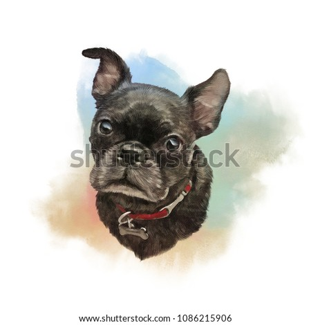 French bulldog. Watercolor realistic Portrait of a Boxer dog. Hand Painted Illustration of Pets. Watercolor Animal collection: Dogs. Good for banner, print T-shirt, pillow. Art background for pet shop
