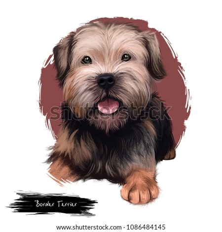 Border Terrier dog digital art illustration isolated on white background. United kingdom origin fox and vermin hunting dog. Cute pet hand drawn portrait. Graphic clip art design for web, print