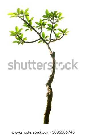 Tree isolated  with clipping paths for garden design. #1086505745
