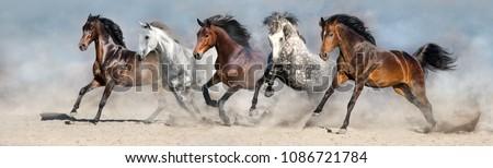 Wild horses run in  desert dust against blue sky