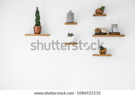 Cacti on wooden shelves in empty interior with copy space on white wall Royalty-Free Stock Photo #1086925535