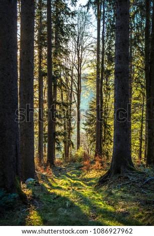 Alpine Forest Sunrise #1086927962