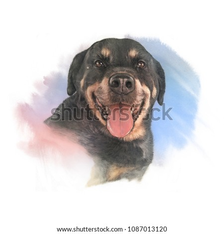 Head portrait of the Rottweiler dog, medium and large breed. Watercolor Animal collection: Dogs. Hand Painted Illustration of Pet. Good for banner, T-shirt, pillow, card. Art background for pet shop