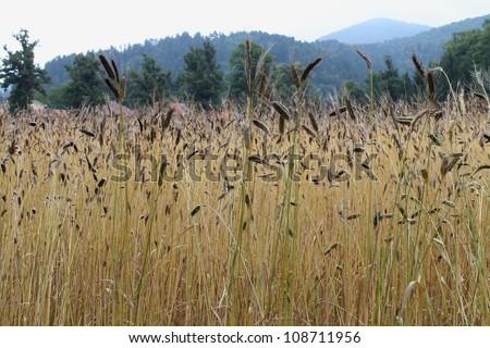 enkir field #108711956