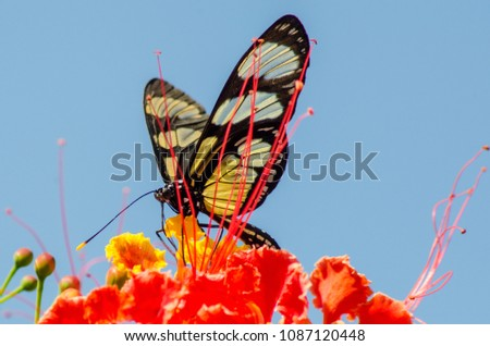 The wonderful colors of nature #1087120448