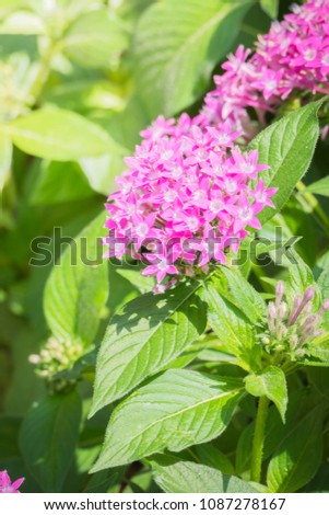 The background image of the colorful flowers, background nature #1087278167