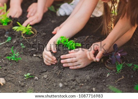 Children's hands planting young tree on black soil together as the world's concept of rescue #1087716983