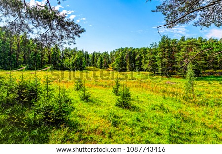 Summer green forest in sunny day landscape. Forest green background. Summer forrest view #1087743416