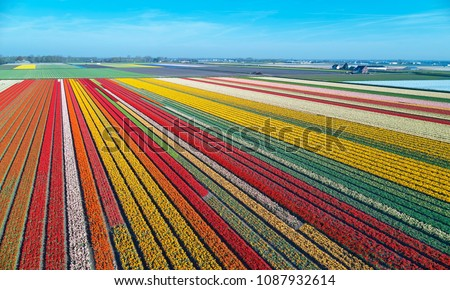 Aerial view of bulb-fields in springtime, located between the towns of Lisse and Sassenheim, province of Zuid-Holland, the Netherlands #1087932614