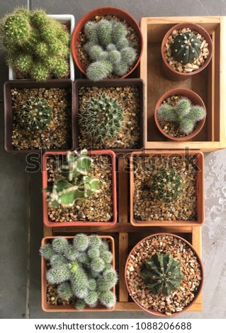 Top view of many cactus in the flower pots and wooden tray #1088206688