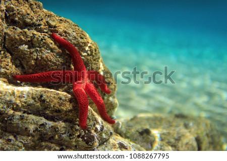 Most beautiful mediterranean sea star underwater photo Royalty-Free Stock Photo #1088267795