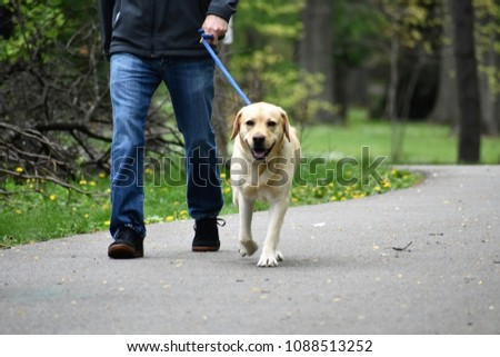 Gain noise, blurry focus hand holding leash ,dog walker #1088513252