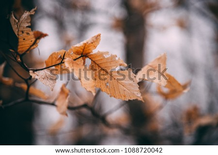 Autumn leaves in the winter #1088720042