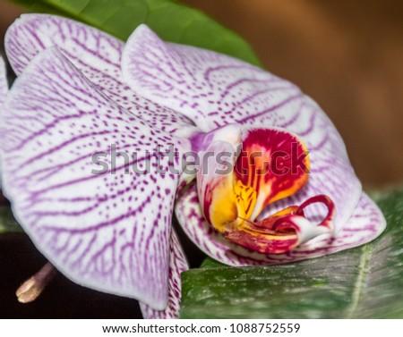 Beautiful orchid on the Mainau island - Bodensee #1088752559