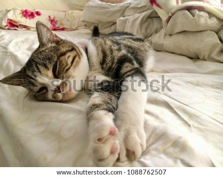 A Scottish fold cat is sleeping on the bed. #1088762507