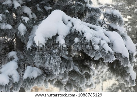 Snow-cowered fir branches. Winter blur background. Frost tree #1088765129
