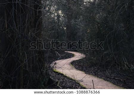 winding path through a dark mysterious woodland  #1088876366