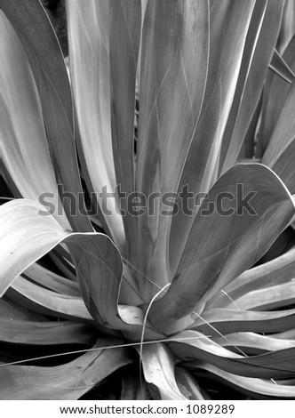 Graphic Plant #1089289