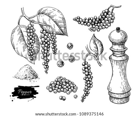 Black pepper vector drawing set. Peppercorn heap, mill, dryed seed, plant, grounded powder. Vintage hand drawn spice sketch. Herbal seasoning ingredient, culinary and cooking flavor. Royalty-Free Stock Photo #1089375146