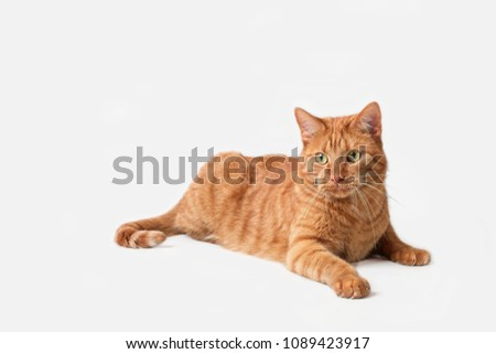 Curious ginger cat lying down. #1089423917