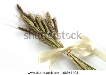 ears of enkir wheat #108961403