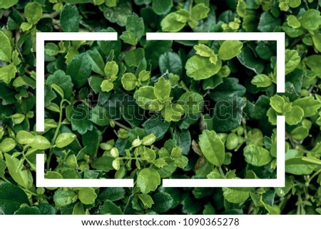 Flat lay nature concept, Layout of green leaves with frame, card note. #1090365278
