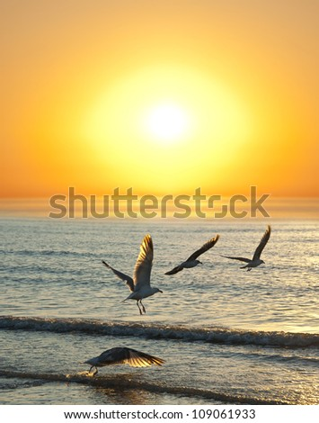 sunset and flying birds #109061933