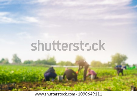 workers work on the field, harvesting, manual labor, farming, agriculture, agro-industry in third world countries, labor migrants, blurred background #1090649111