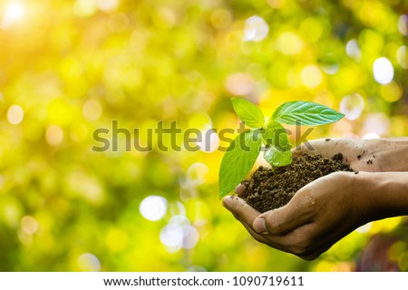 Plant in hands.Young couple carrying plant and planted a plant in to the soil on green back ground.field,land,hope,Global warming.Photo concept save world and ecology.  #1090719611