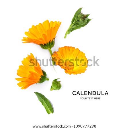 Creative layout made of calendula . Flat lay. Flower concept. Calendula on the white background.