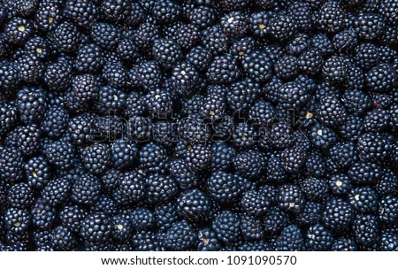 Background from fresh Blackberries, close up. Lot of ripe juicy wild fruit raw berries lying on the table. Top view, Flat lay #1091090570